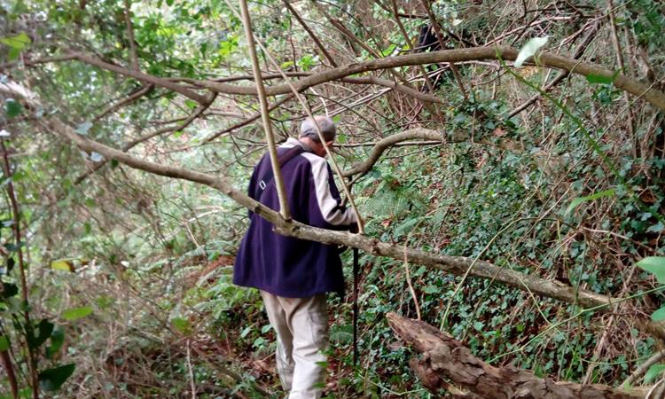 Bosque cantábrico de Ubiarco
